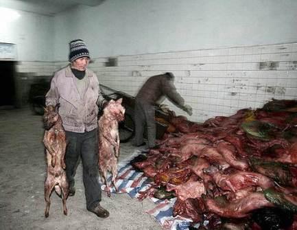 matan-perros-china071
